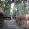 【京都観光】京都嵐山観光、常寂光寺多寶塔と小倉山二尊院