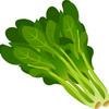 食品学実験(4)食品の色素クロロフィル