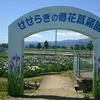 大井町の花菖蒲、開成町のあじさい、南足柄のハナアオイが見頃です!