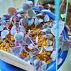 🌵多肉植物 ハートカズラの蕾🥀しいたけ栽培🍄他🌵