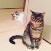 アニマルコミュニケーターyukiさんのネコさん達から感想をいただくの巻  その2