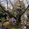 水元公園(葛飾区)お花見&BBQ情報!ママ目線の子供の遊び場・公園情報