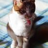 今回はネコだけ。グーちゃんのお話し。