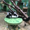 わんぱーくこうちのアニマルランドは入園料が無料で動物見放題!!