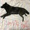 甲斐犬サンの壁画シリーズ〜久々ノ登場❗️( ^ω^ )