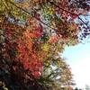 四季のある日本も大好きですが・・・ 週末もがむしゃらに働きます!!