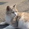 【一日一枚写真】坂道の美人猫【一眼レフ】