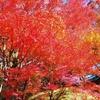 すっかり秋になって来ましたね!
