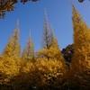 今年もやっぱりちょっと遅かった感あり(^^;)、「明治神宮外苑いちょう並木」