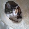 【愛猫日記】毎日アンヌさん#295