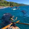 ジンベイザメと泳ぐシュノーケリング体験ができるセブ島の漁村オスロブ!遭遇率100%で迫力満点!