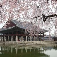 韓国の結婚事情とは?結婚式や国際結婚のあれこれ
