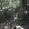 【宮島女性日帰り一人旅レポ④】春陽・植物を楽しむハイキング。デートにもオススメ【弥山登山】