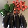 初心者の家庭菜園 野菜の収穫期は続く