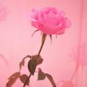 薔薇の棘からもう抜けられない