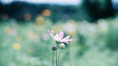 フィルムで撮る花のポートレート写真 - 花の「瞳」「表情」「感情」をとらえる