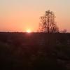 ウルルの朝日&散策