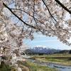山の桜、平地の梨と桃