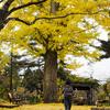 秋のお散歩/幼稚園の劇の練習