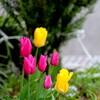 4月9日  マンション花壇
