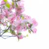 新緑の花たち