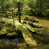 庭園1 西芳寺(苔寺) 夢窓疎石晩年の最高傑作の庭園