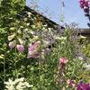 web Open Garden 2020