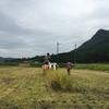 雨降る前に稲を刈る(2017年9月5日)