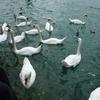 デンマーク&ドイツ&スイス旅「のんびり避暑地の雰囲気!チューリッヒ湖畔で物思いにふける」