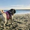 サザンビーチ・お洒落な「北原珈琲」テラス席で愛犬と過ごす