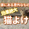 【猫よけ対策】効果絶大!!家にある意外なものおすすめ5選