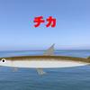北海道釣り(道南) 魚種別攻略【チカ①(タックル編)】