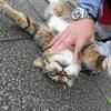 6月後半の #ねこ #cat #猫 その1