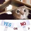 賃貸物件で【猫はNG】の理由とその対策
