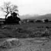 本薬師寺跡で南門跡が見つかる