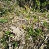 人の手により維持される茶草場という環境