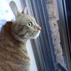 猫さん、キャットウォークに昇る