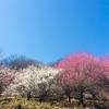 桜だけじゃないお花見。