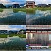 終日、大豆の圃場の畦畔の草刈りと溝を切り直すこと