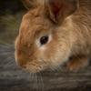 ウサギと毒ガスの島、大久野島に海外紙が厳しい目