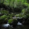 超広角で渓谷を撮る【SIGMA dp0】