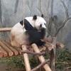 【旅行記】深圳野生動物園は見どころ満載ですが、突っ込みどころも満載です