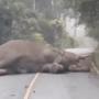 「ゾウが通せんぼするんで遅刻します」→ 何アホなこと言うてんねん・・・ほ、ほんまや(゜o゜;
