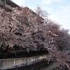 【桜の季節と関西ウォーカーとラッキィスペシャルの3本です。】
