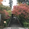 鎌倉の紅葉情報2019  今日の円覚寺  11月29日