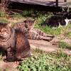 トア公園の猫たち、中々モフ☆モフさせてくれません。