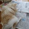 新聞大好き