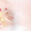 桜もう咲くじゃん!