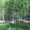 竹藪が草だらけ