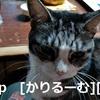 2018/12/05 猫スズ(すず)写真 KIMG0240